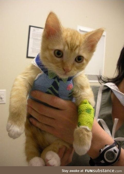 Kitty got a boo boo and the vet made his body cast look like a little shirt and tie