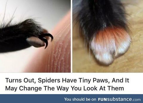 But they have 8 paws!