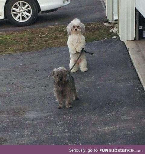 Dog has evolved