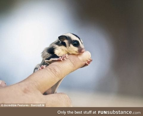 Day 595 of your daily dose of cute: *Google's tiny baby creature*