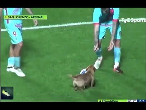 Puppy Interrupts Soccer Game and Steals the Ball
