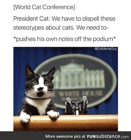 Mr. Catsident doing important things