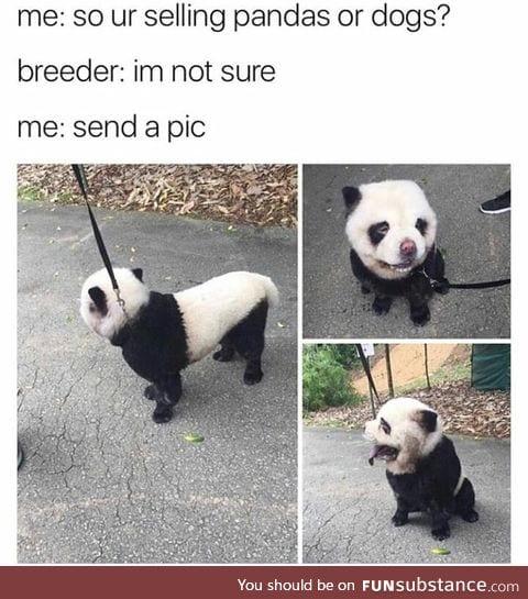 That's a pandog