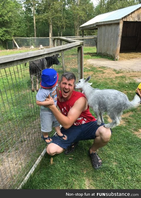 Vicious goat attack