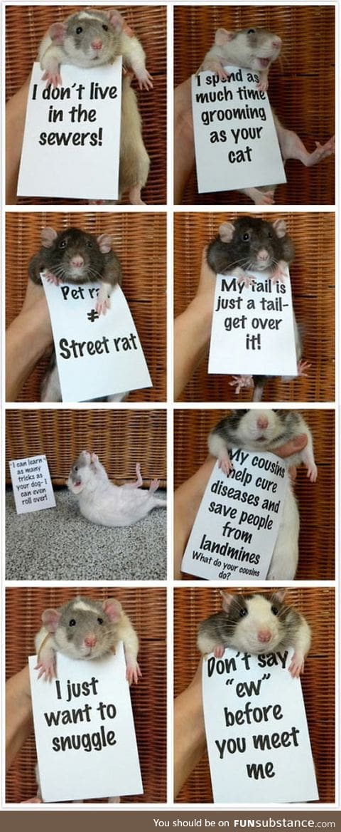 Rats are so misunderstood