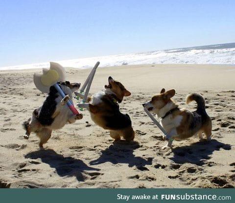 Epic corgi battle