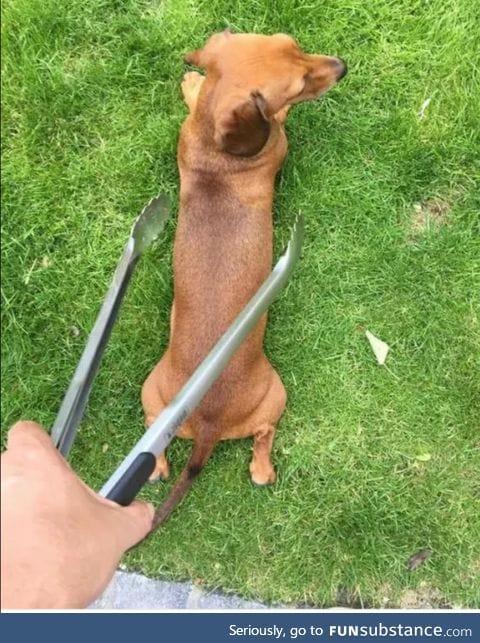 When you accidentally drop a dog