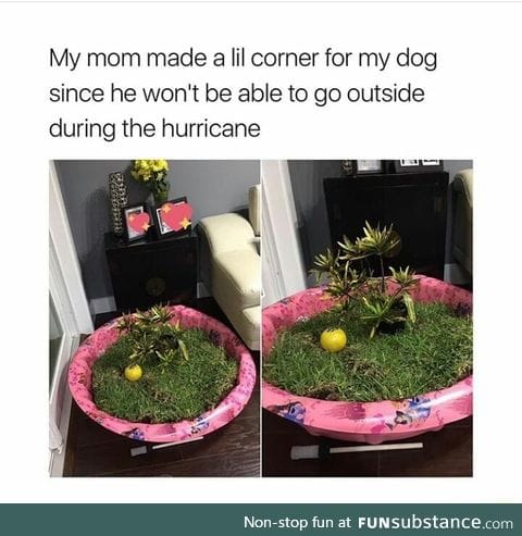 Like outdoor corner for the dog
