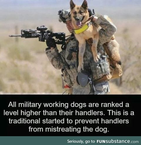Dogs rank higher than you