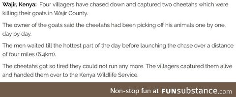 Only in Kenya can men chase and catch the fastest land mammal