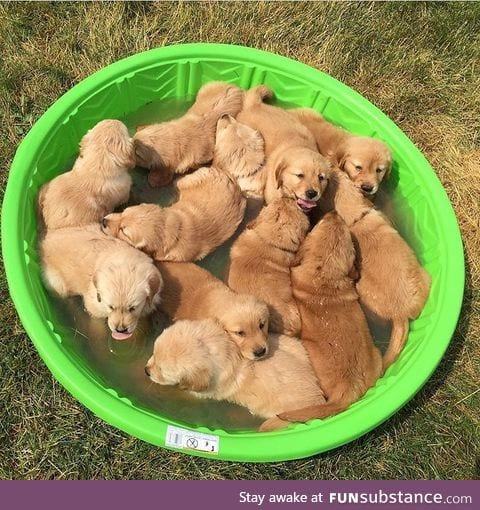 fluffy bowl of puppys