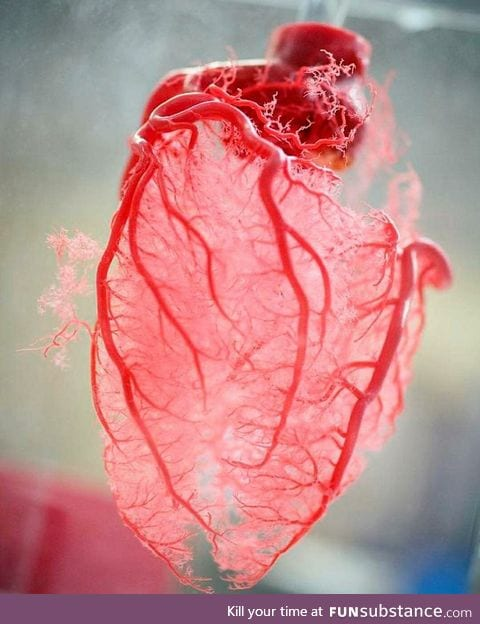 Resin cast of human heart blood vessels