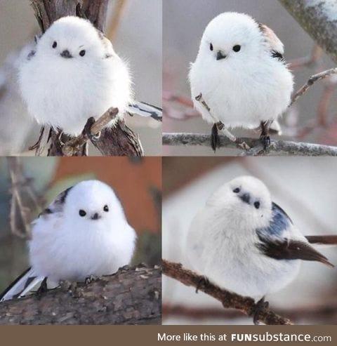 Sweet little marshmallow