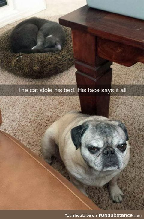 He's Not Amused In The Least