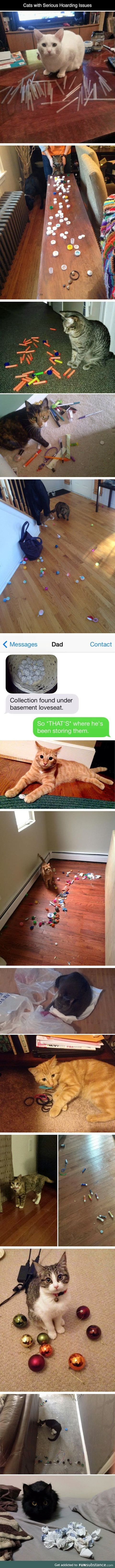 Cats with hoarding issues