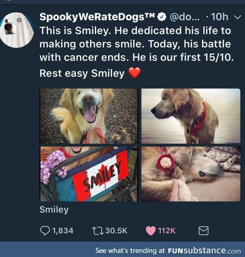 A nice tribute to Smiley the blind golden
