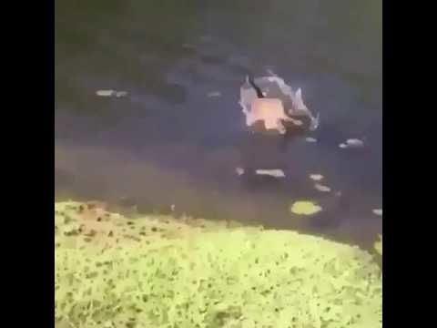 Cat jumps into lake after guy sneezes