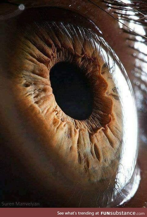 A micro photo of an eye
