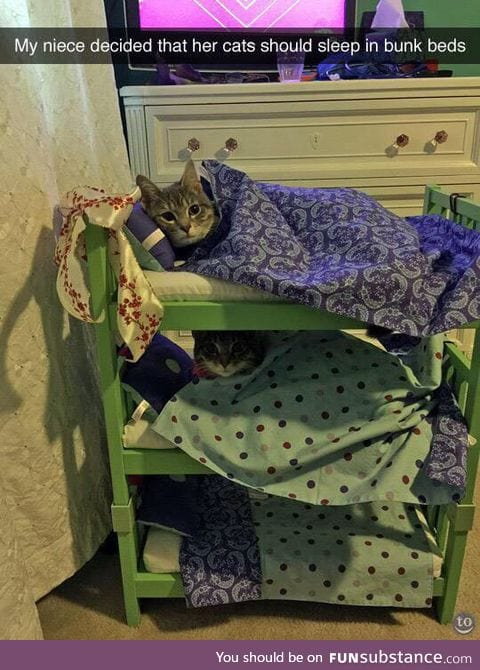 Bunk bed pals