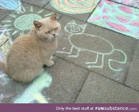A disappointed cat