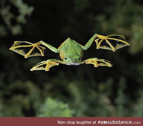 Ever seen a flying frog?