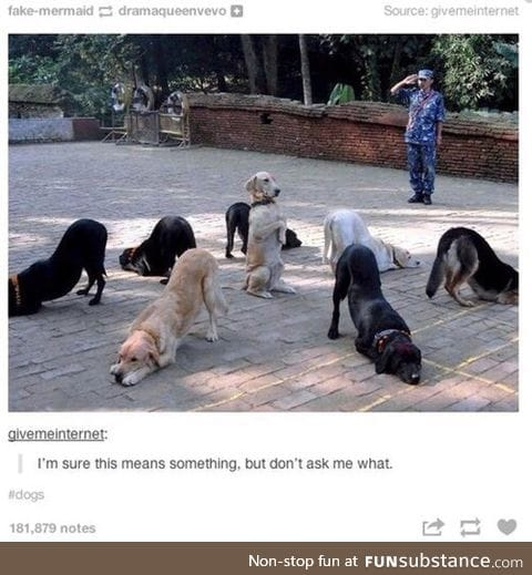 And they say dogs are understandable