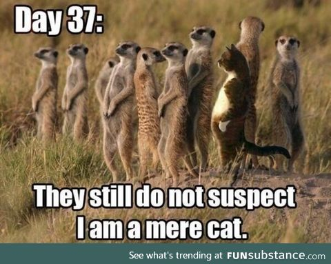 Just merely a cat