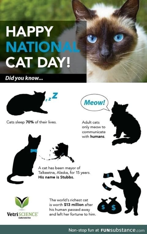 Interesting cat facts 2017