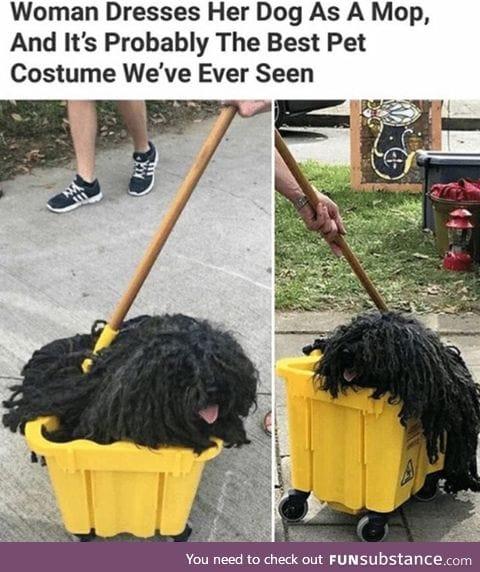 Mop looks like a dog