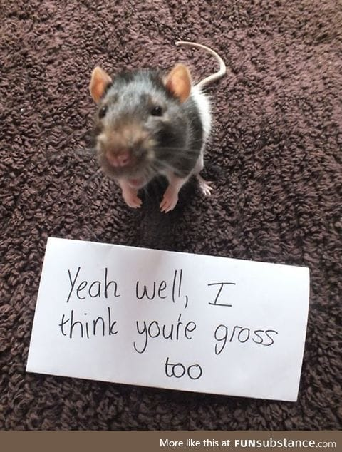 Rats are gross, they say