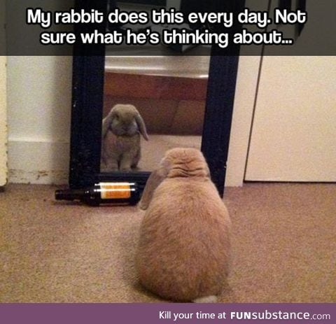 Introspective rabbit
