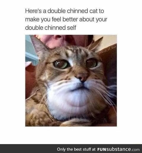 This cat has double chin