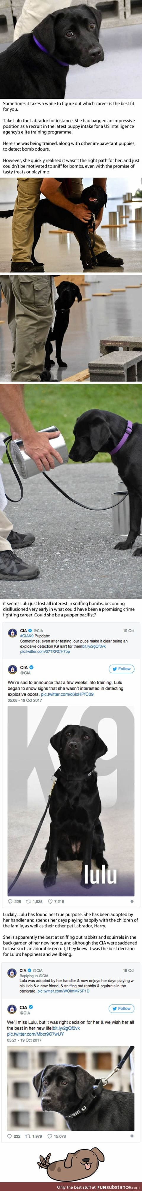 Dog Got Fired From CIA Because Sniffing Bombs Just Wasn't Her Thing