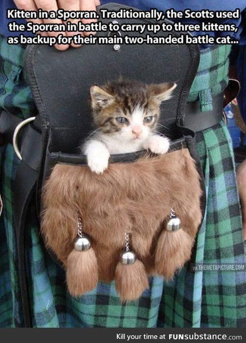 Ever seen a battle kitten?