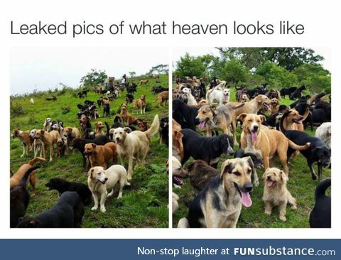 When dogs die, they don't go to heaven, the become a part of it