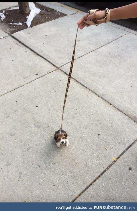 A teeny tiny itty bitty pupper!