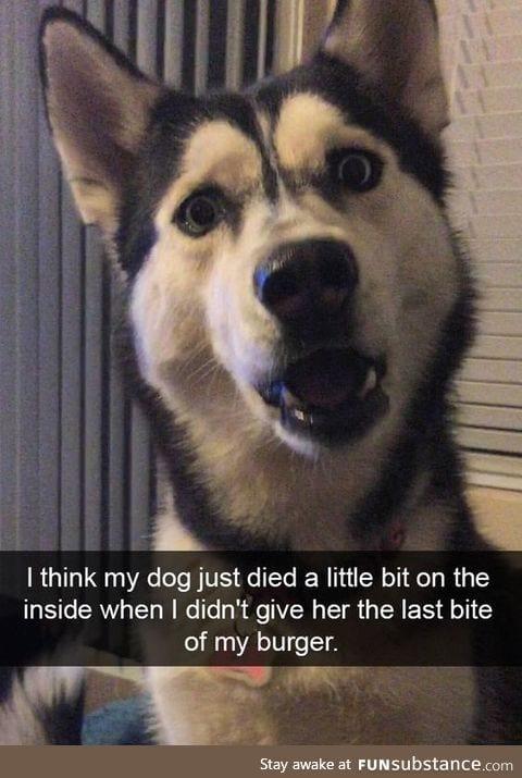 poor lil dogo