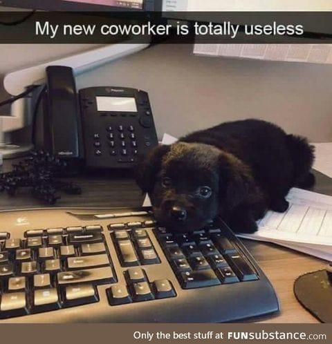 Cute coworker