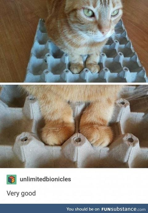 Her paws fit perfectly in the egg carton