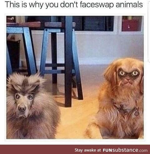 Face swapped animals