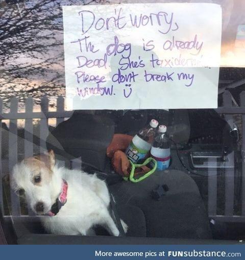The dog is already dead, please don't break my window =)