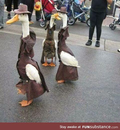 Classy ducks