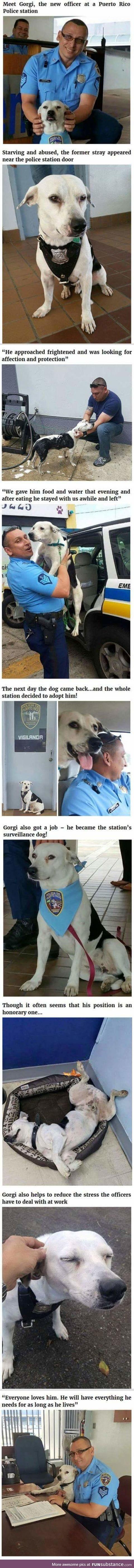Gorgi the new doggo police officer
