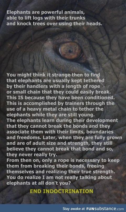 Very powerful animals