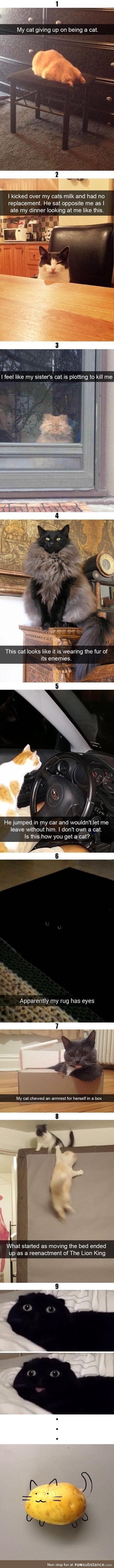 Cats doing weird thing