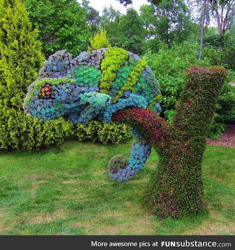 Succulents grown into the shape of a Chameleon, Montreal Botanical Garden