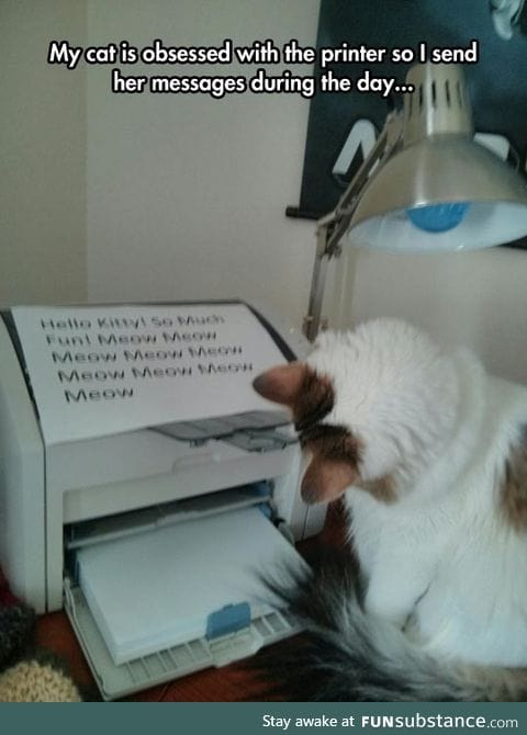 Kitty's New Obsession