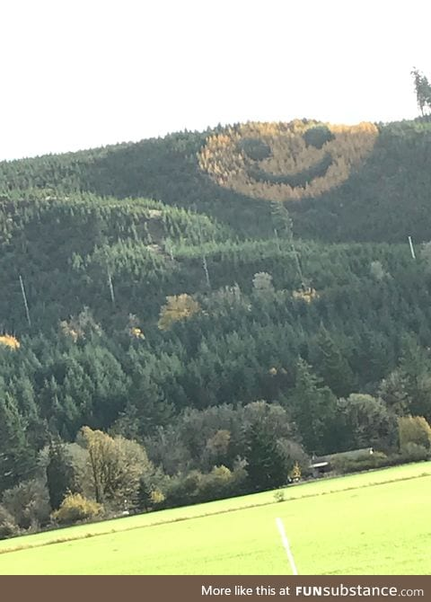 A happy hillside in Oregon