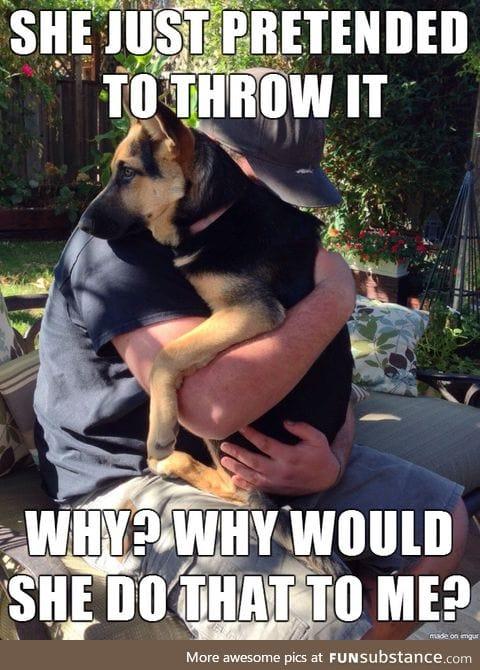 Traumatized dog