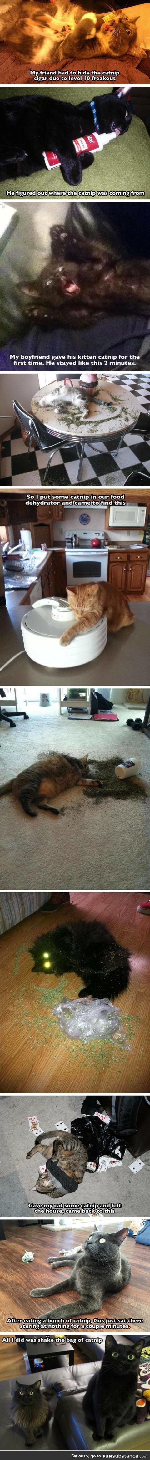 Don't Do Catnip, Kids